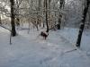 Phoebee im Schnee - Bild 1