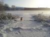 Phoebee im Schnee - Bild2