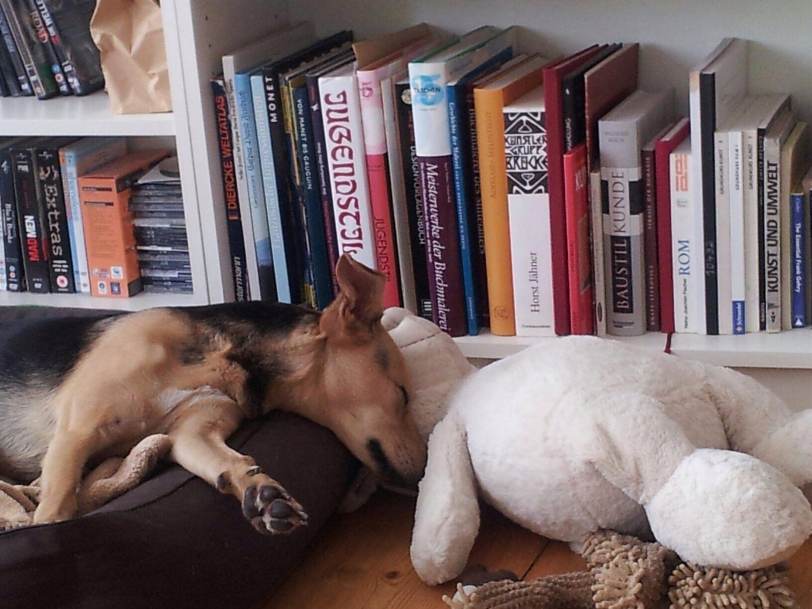 Phoebee und der Bär