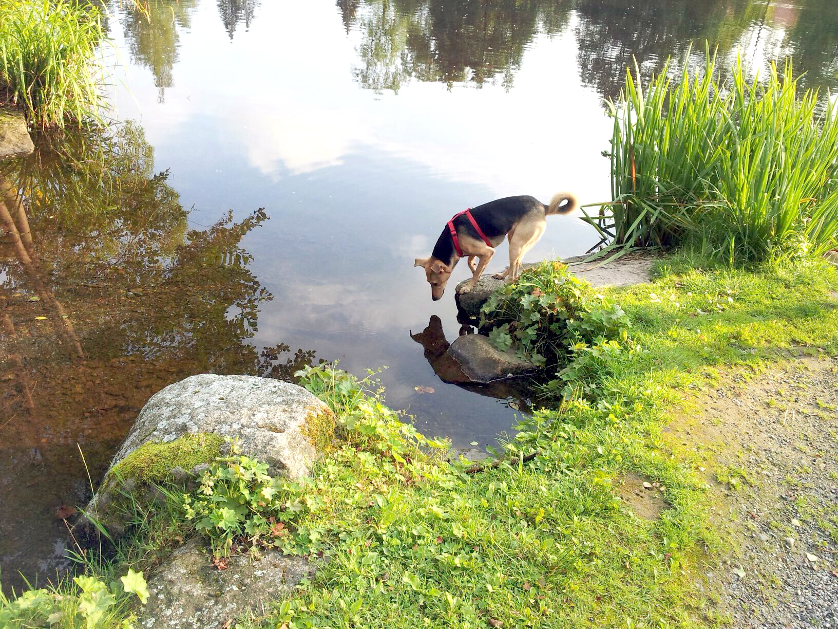Frauchen, da ist ein Hund im See